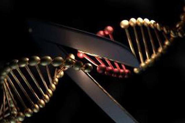 """基因编辑婴儿:法律明确禁止 """"不得用于妊娠"""""""