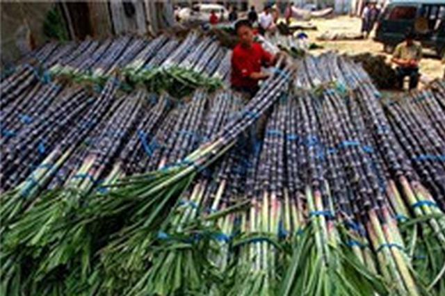 海南制糖企业不得变相抬价或变相压价收购甘蔗 违者可举报
