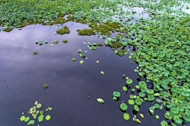 央视《焦点访谈》点赞海口:生态治水 湿地入城