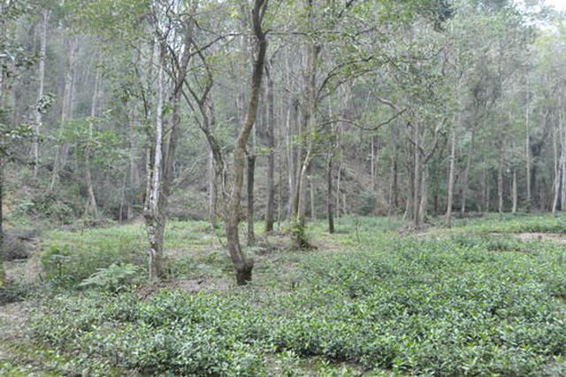 三亚部署清退侵占生态公益林工作 将清退面积超过7000亩