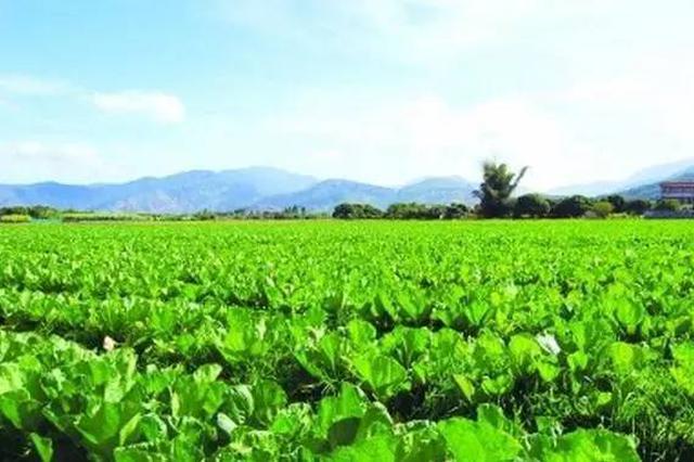 海南乡村振兴工作队进驻村镇 覆盖2561个行政村
