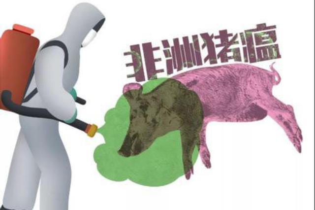 非洲猪瘟科普 看完这些涨知识了
