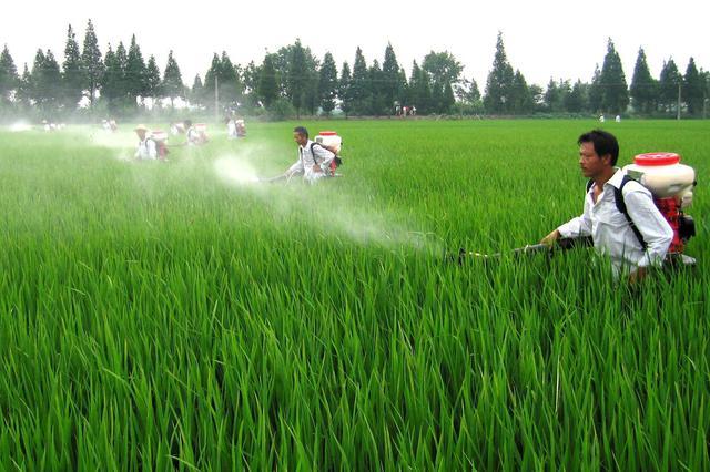 高温天气农作物要适当浇水及时防虫害