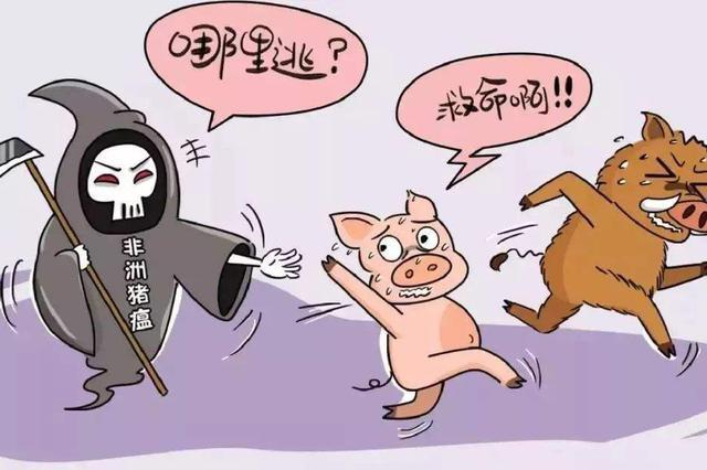 非洲猪瘟传猪不传人 消费者可放心食用正规渠道猪肉
