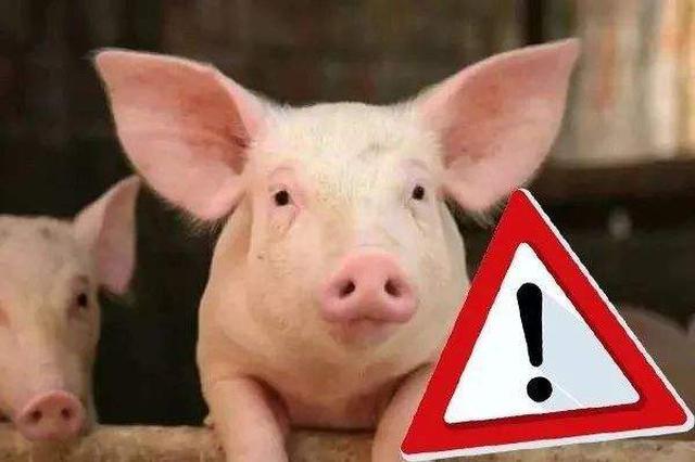 儋州、万宁、海口市秀英区等县非洲猪瘟疫区解除封锁