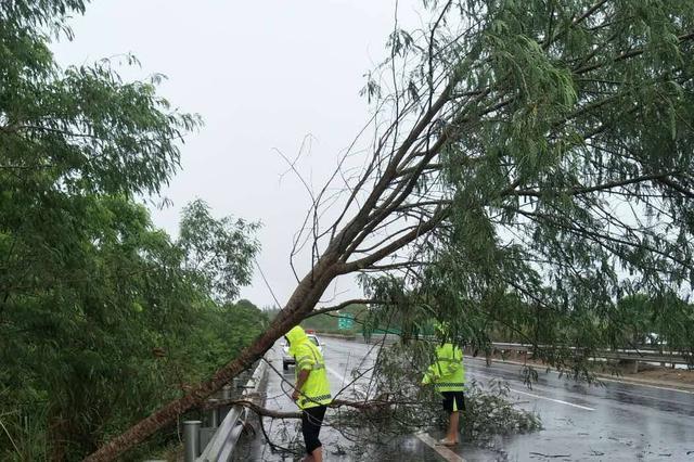 强降雨致树木横倒 儋州交警及时排除险情