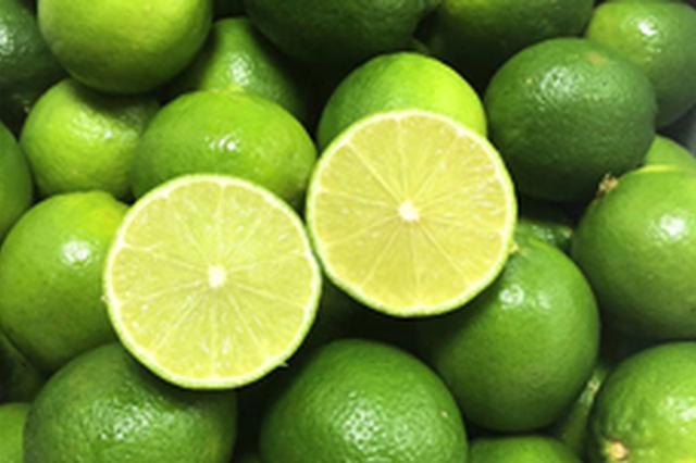 海南柠檬鲜果迎来集中上市期 价格波动大果农很受伤