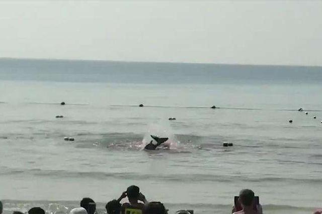 网传三亚大东海海滩出现鲨鱼咬人?真相其实是......