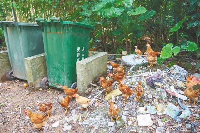定安梅种村:村道遍布猪屎牛粪垃圾成堆