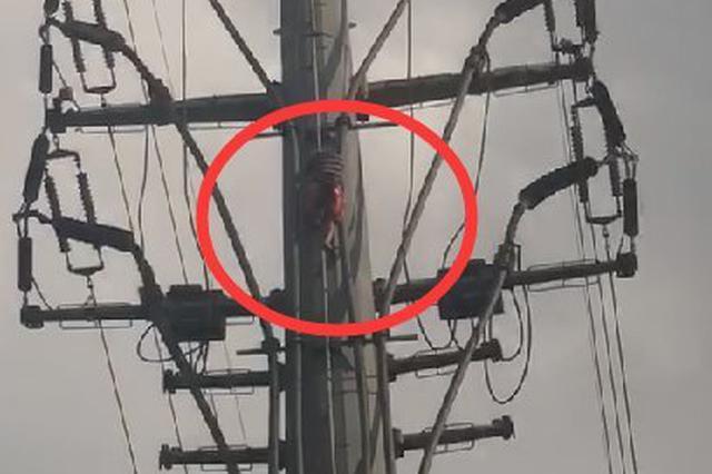 突发!海口国兴大道有人爬上高压电线杆欲轻生