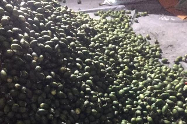 新一轮涨价!万宁槟榔每斤5.1元 槟榔你还嚼得起吗?