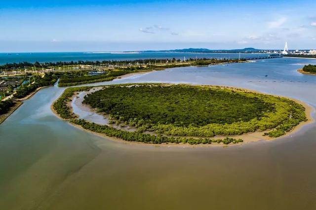 海南东寨港为何能吸引万鸟翩跹?原来是这么回事……