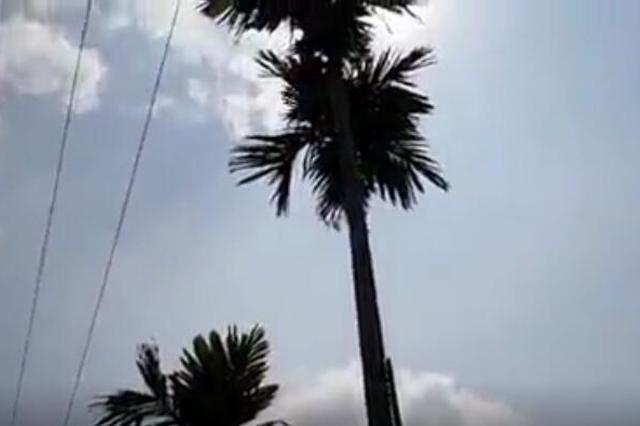 悲剧!万宁一名14岁男孩采摘槟榔触电身亡 全身衣服被烧焦