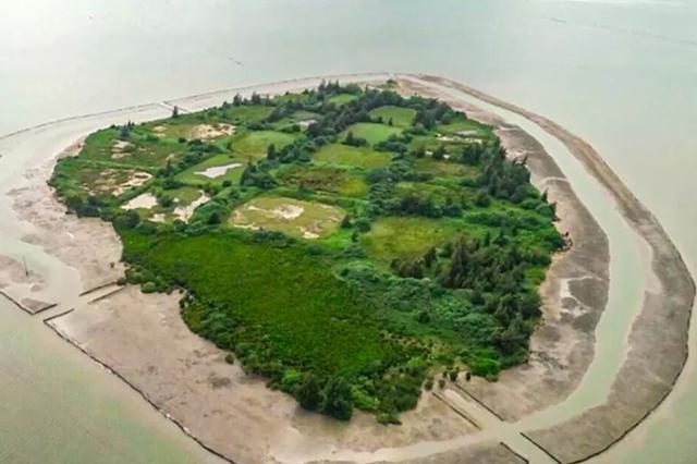 海南东寨港新增158亩红树林 红树林面积已扩大至1771公顷