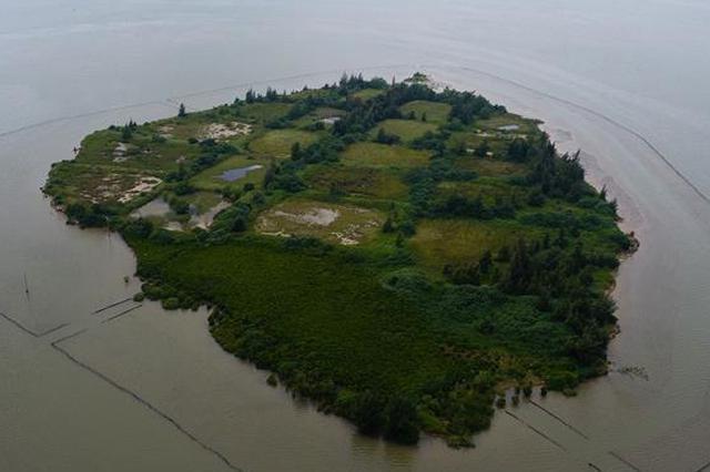 海南东寨港国家级自然保护区红树林面积扩大至1771公顷