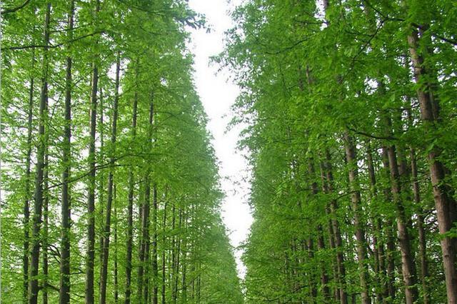 事发陵水吊罗山!为种植槟榔,男子私自砍伐806株林木受审