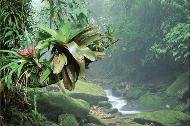 省领导干部学习专题讲座聚焦热带雨林国家公园建设
