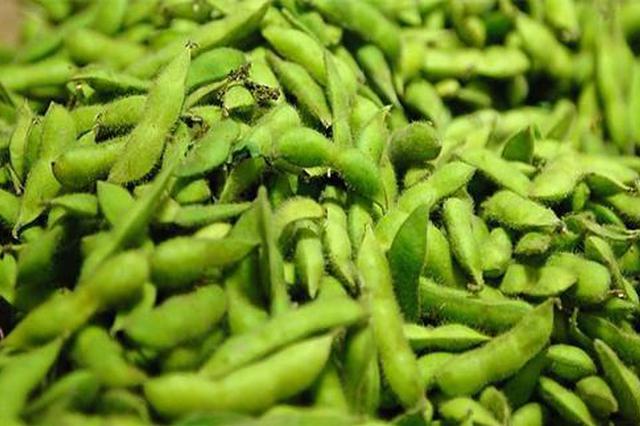 农业产业结构调整显成效 海南临高数千亩毛豆丰收