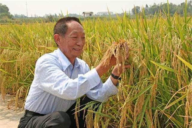 """袁隆平推""""袁梦计划"""" 3年种植耐盐碱地水稻20万亩"""