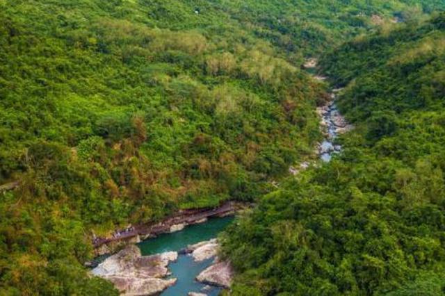 今年海南热带雨林国家公园建设提速 加强长臂猿保护