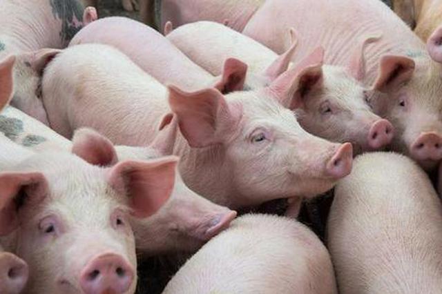 省农业农村厅组织召开生猪复产政企对接会
