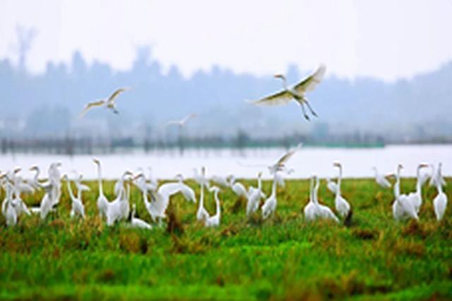 海南省生态环保百日大督察10个督察组进驻市县