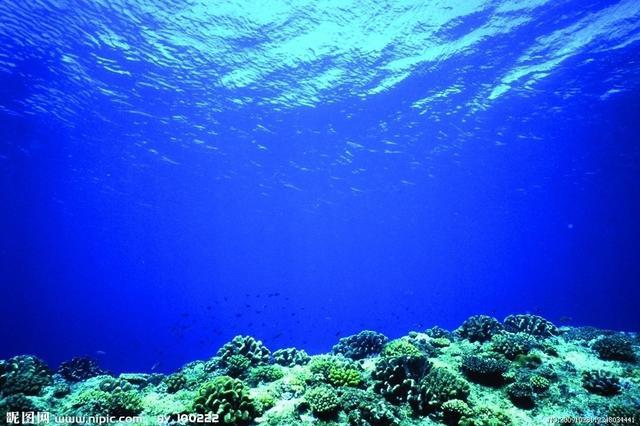 海口湛江北海建立协作机制 联手保护海洋生态环境