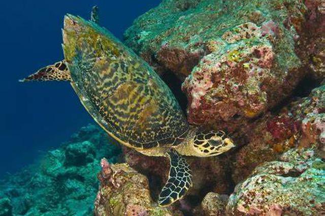 扫黑牵出非法交易海龟大案 系国家珍稀濒危野生动物