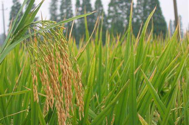 海南建成145家农村综合服务社 开展为农服务业务