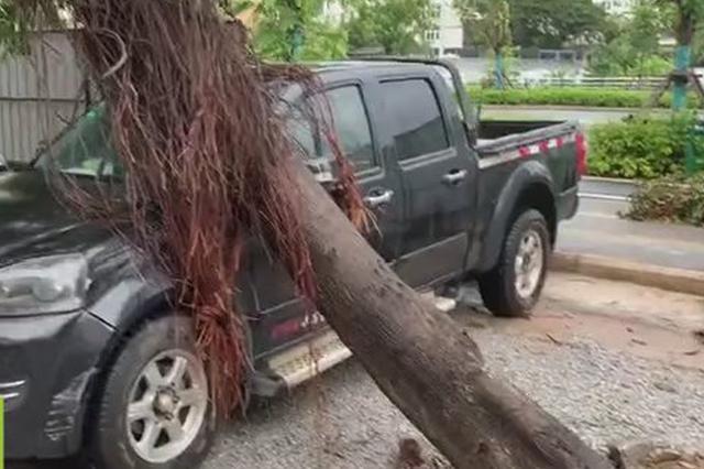 """台风吹倒大树压住私家车 三亚消防员暴雨""""施救"""""""