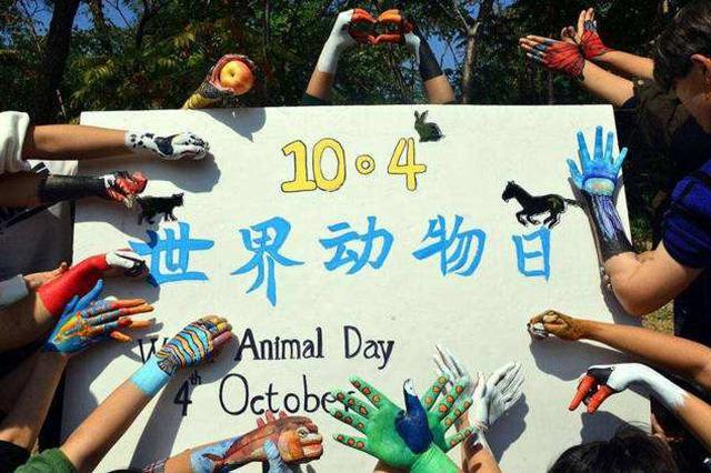 """海口举办世界动物日活动 """"Hi游海口""""持续升温"""