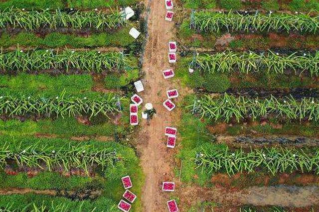 东方今年计划种植冬季瓜菜40万亩