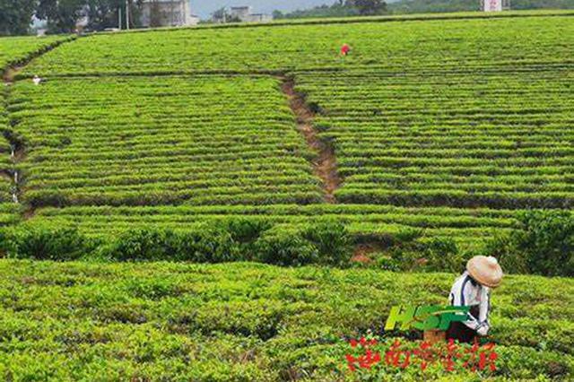 海垦茶业集团入选2020年中国茶业百强企业