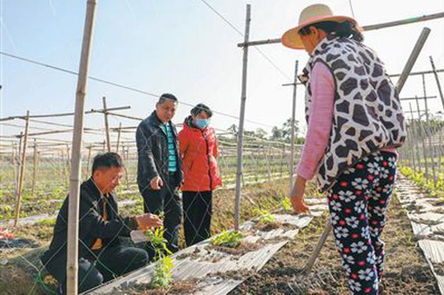 海南积极做好农业抗低温保生产工作