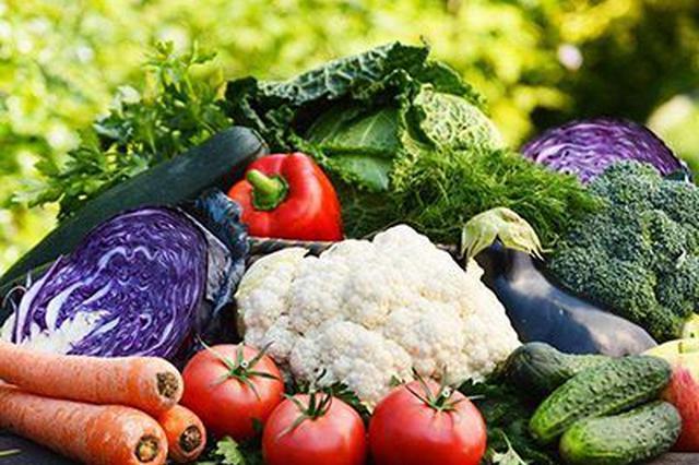 海南全省已种植冬春瓜菜面积236.15万亩
