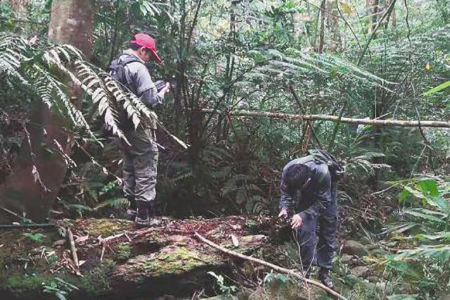 日巡十公里 海南热带雨林国家公园护林员护林爱林