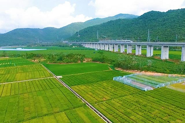 打造国际化种业科创模板 三亚国际种业科创中心成立