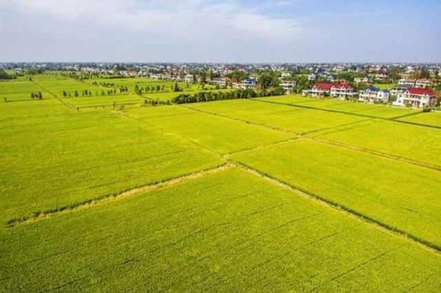 3年累计投入34.1亿元 海南建成高标准农田409万亩