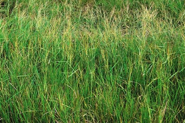 加强保护开发利用 三亚将建世界野生稻种质资源圃