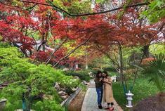 春天栖霞山的红枫开花了