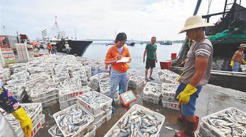 文昌:渔货丰收供市场