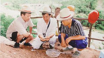 海南史前考古曾发现熊猫犬齿化石