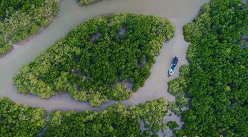 海口冬季红树林 游客享受自然