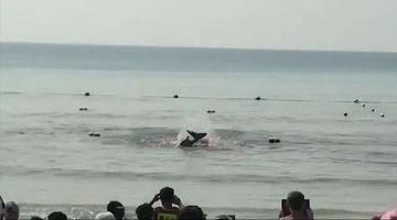 网传三亚大东海海滩出现鲨鱼咬人?