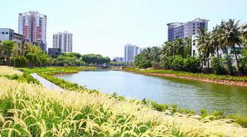 海口鸭尾溪河岸 生态修复展新貌