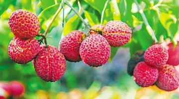 海南:天然大温室 瓜菜四季香