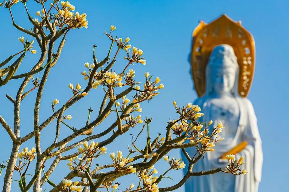 聆聽南山:念一處春光,遇一場花開