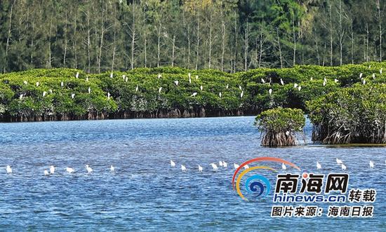 海南新盈红树林国家湿地公园一角。新华社记者姜恩宇摄