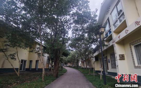 图为海南省白沙黎族自治县元门乡的黎族村庄罗帅村村民居住的小楼房。 张茜翼 摄