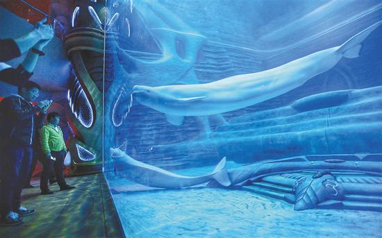 二月八日,游客在三亚亚特兰蒂斯水族馆游览。海南日报记者 武威 摄